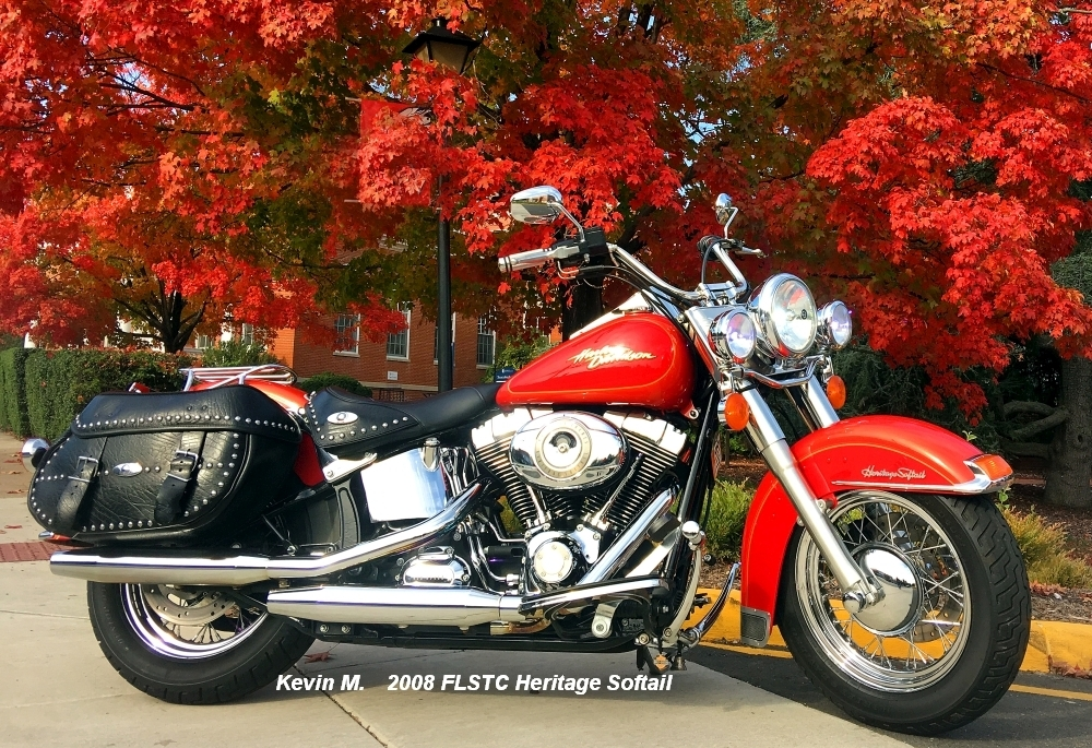 Kevin M softail